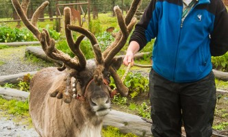Alaska Wildlife Conservation Center 02 n4yrx5