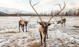 Alaska Wildlife Conservation Center 03 n4yrxa