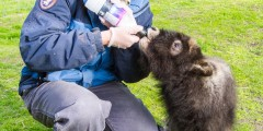Alaska Wildlife Conservation Center 03 n4yrxz