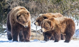 Alaska Wildlife Conservation Center 01 n4yrw6