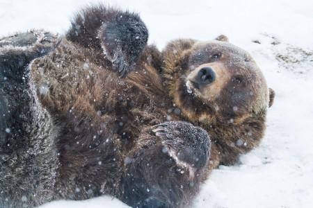 Alaska Wildlife Conservation Center 03 n4yrwm