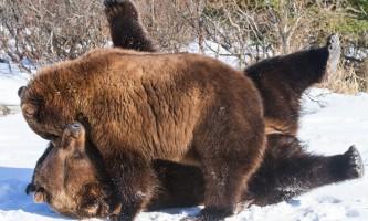 Alaska Wildlife Conservation Center 04 n4yrwr