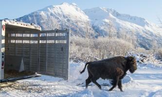 Alaska Wildlife Conservation Center 03 n4yrv6