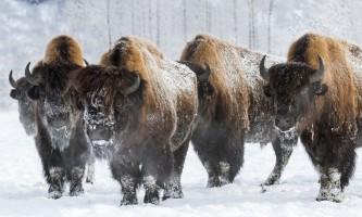 Alaska Wildlife Conservation Center 04 n4yrvb