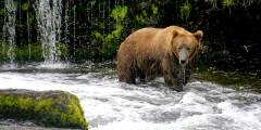 Bald Mountain Air Bear Viewing