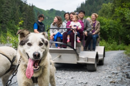 Seavey's IdidaRide Sled Dog Tours
