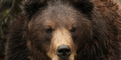 Fortress of the Bear: Guaranteed Bear Viewing