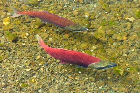 Kenai River Float Trip