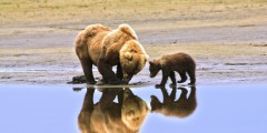 Alaska Bear Adventures Day Tours