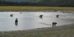 Alaska Bear Camp Overnight Adventures