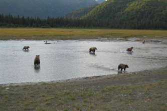 Bear-Camp-IMG_2044-phucsm