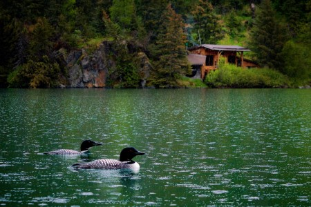 Alaska's Loonsong Lake Wilderness Lodge