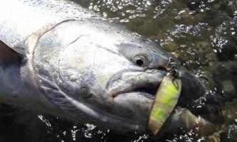 Soldotna-bnb-alaska-fishing-charters-Copy_of_IMG_1791-ohfh05
