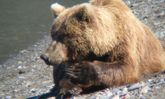 Bear-Camp-IMG_1647-phucsk