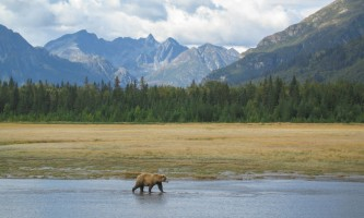 Bear-Camp-IMG_2611-phucso