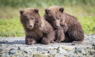 Geographic-marine-expeditions-Jess_Chris_photos_for_Island_Bears-64-p4mkjm