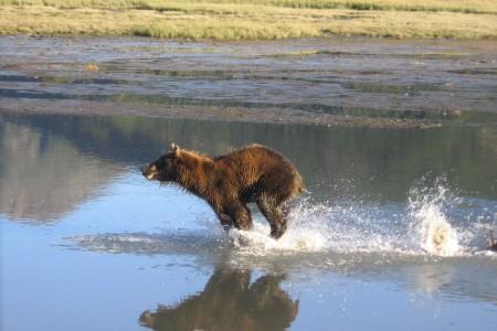 Great Alaska National Park Safari