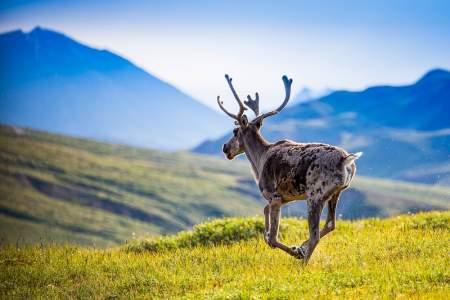 Alaska 11-Day Grand Journey