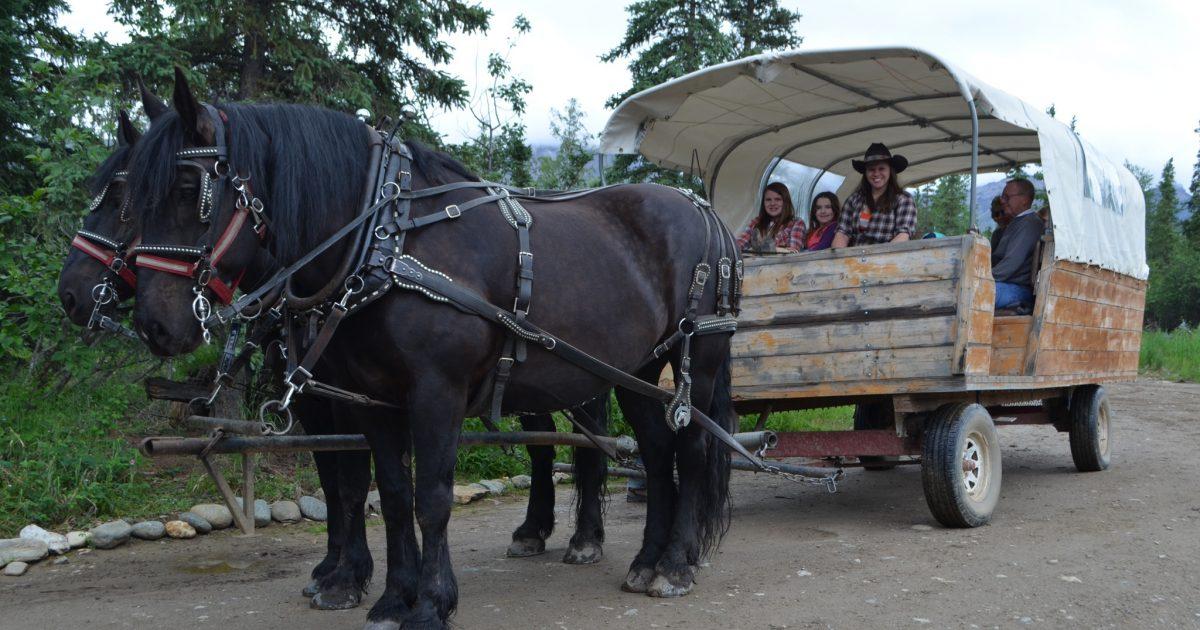 Black Diamond Covered Wagon Tour Alaska Org
