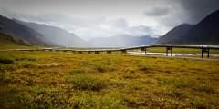 Raised Animal Pipeline Crossing