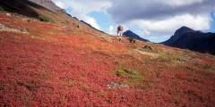 Rendezvous Peak Trail
