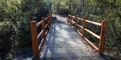 Middle of the Bridge