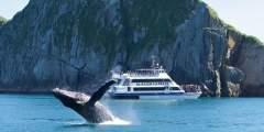 Major Marine Kenai Fjords Cruise