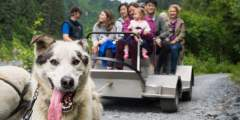 Seavey's IdidaRide Sled Dog Tours