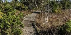 Mindfulness Rainforest Treks