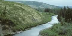 Anvik River