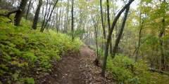 Coalition Loop Trail