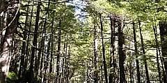 Power Creek Trail