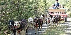Dog Carts and Learning Adventures