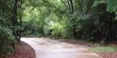 Fish Creek: Road Accessible Bear Viewing