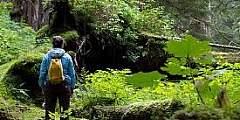 Heney Ridge Trail