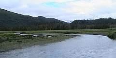 Humpy Creek Trail