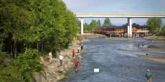 Salmon Viewing at Ship Creek