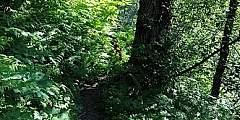 Mount Juneau Trail
