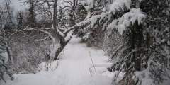 Near Point Trail