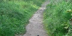 Rabbit Creek Trail to Rabbit Lake