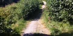 Reber Trail