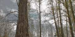 Lower Troublesome Creek Trail