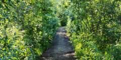 Wagon Road Trail (McCarthy Access)
