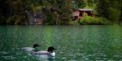 Alaska's Loonsong Lake Wilderness Lodge