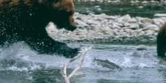 Bear Creek Weir