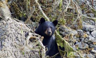 2018-Bear-Viewing-Lodge-Alaska-p41xth