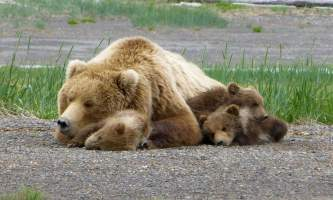 2018-Bear-Viewing-Lodges-Alaska-p41xqw