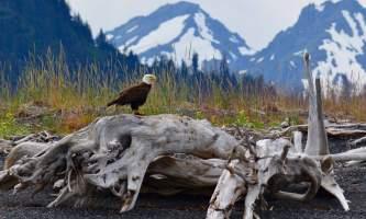 2018-Wilderness-Lodges-Alaska-p41xt7