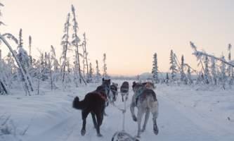 2018 alaska mushing school winter 1 pj6ktr