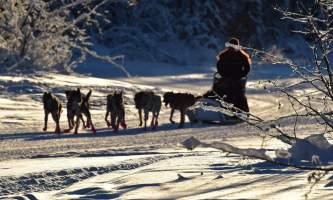 2019 dog sled alaska pmkpxz